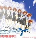 flutter of the birds